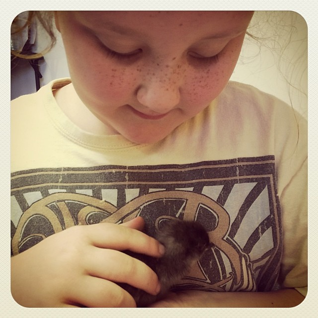 Baby chicks hatched at our homeschool charter! #homeschool