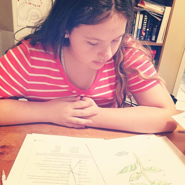 Working on plant anatomy -Beckie #PandiaPress #Biology2